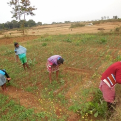 Tending the Fields, Sidrol